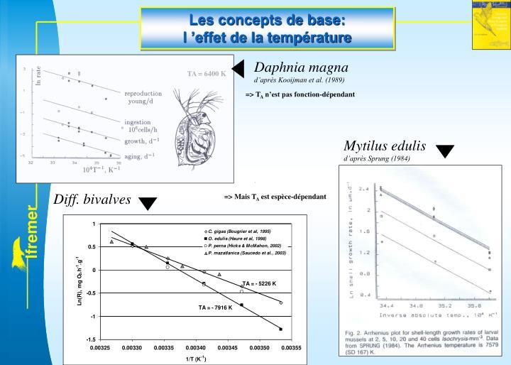 Daphnia magna