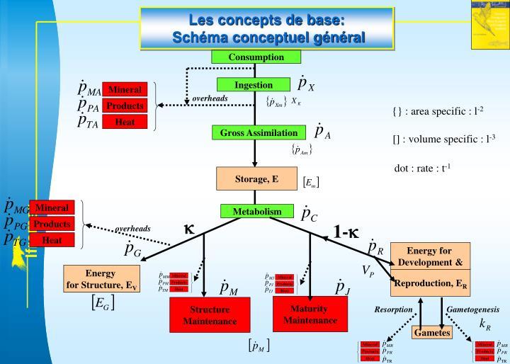 Les concepts de base: