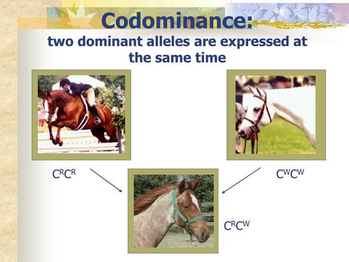 Codominance: