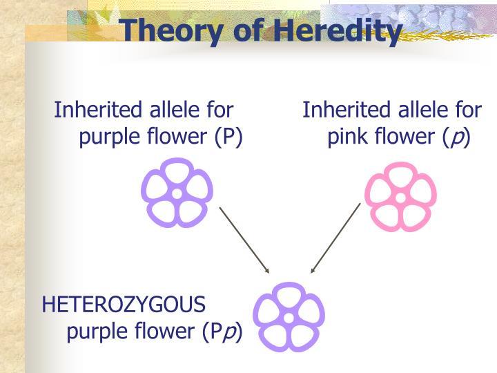 Theory of Heredity