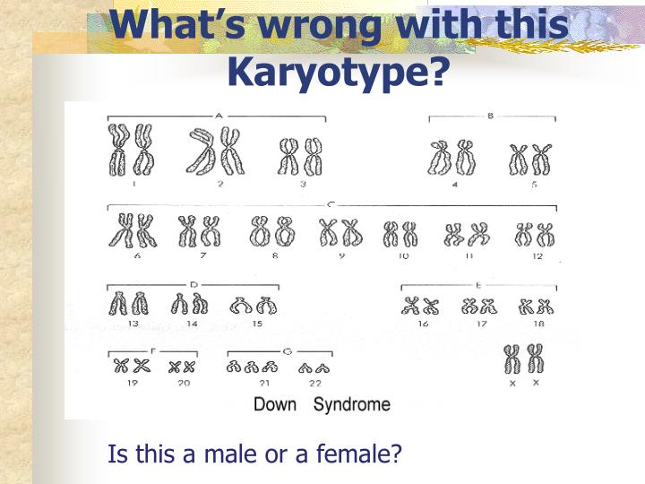 What's wrong with this Karyotype?