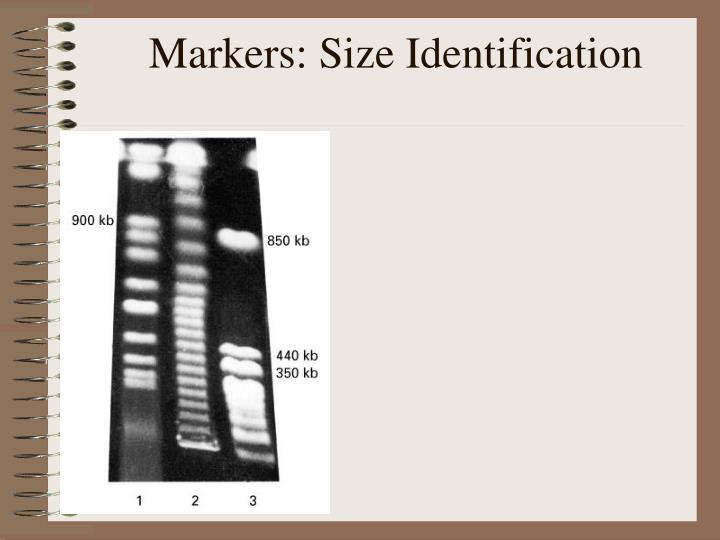 Markers: Size Identification