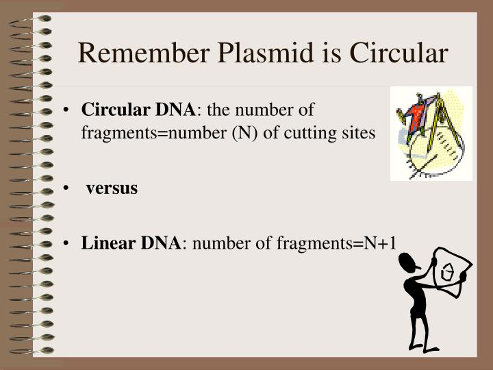 Remember Plasmid is Circular