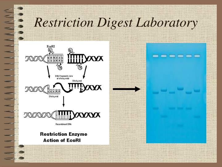 Restriction digest laboratory