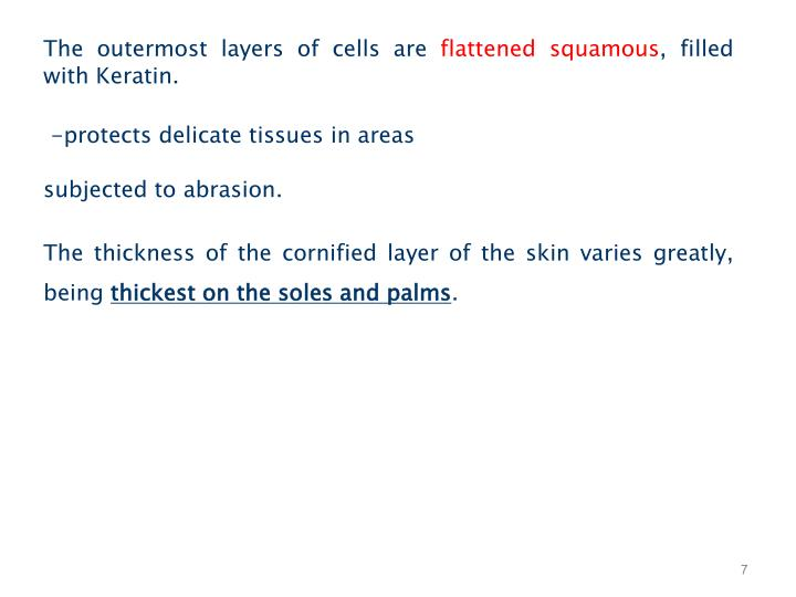 The outermost layers of cells are
