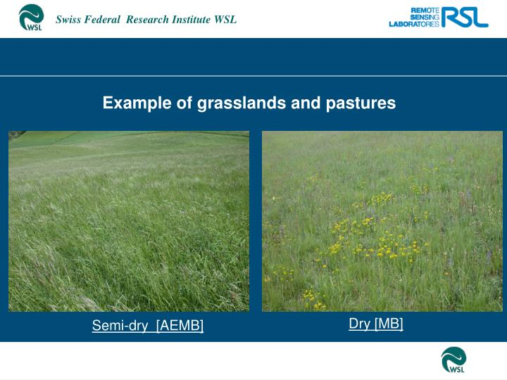 Example of grasslands and pastures