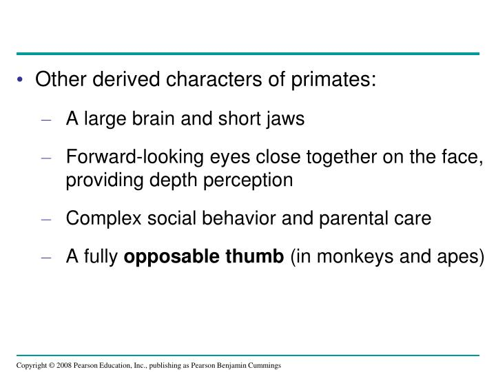 Other derived characters of primates: