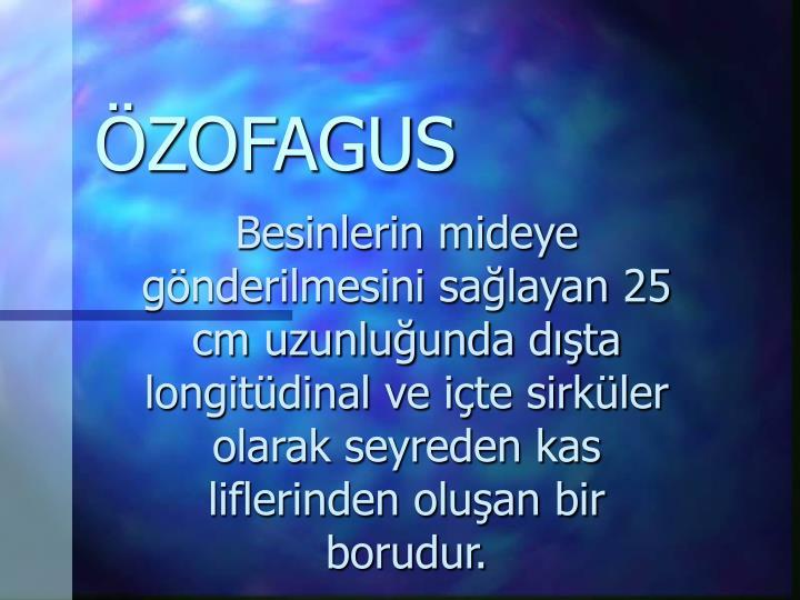 ÖZOFAGUS