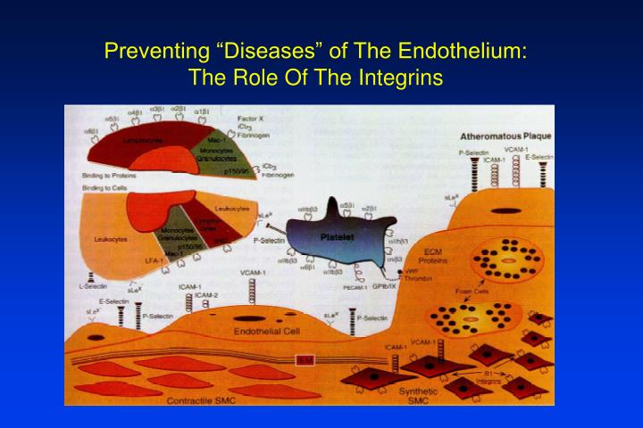 "Preventing ""Diseases"" of The Endothelium:"
