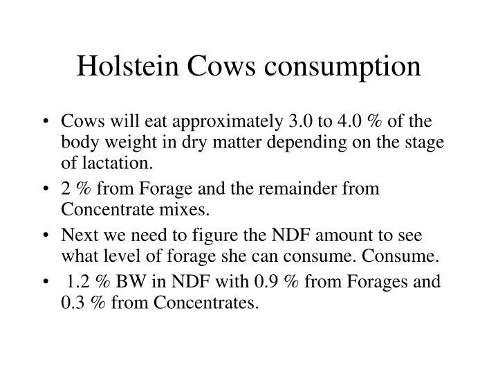 Holstein Cows consumption