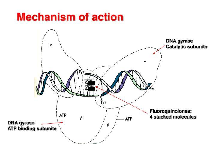 DNA gyrase
