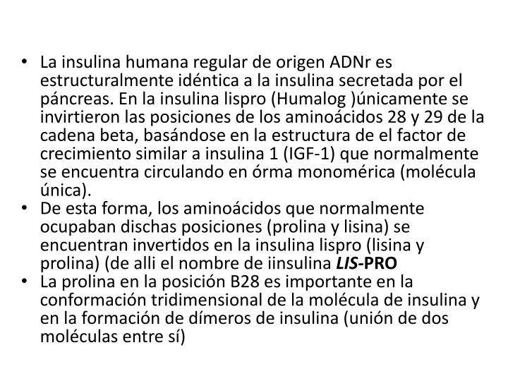 La insulina humana regular de origen ADNr es estructuralmente idéntica a la insulina secretada por el páncreas. En la insulina lispro (Humalog )únicamente se invirtieron las posiciones de los aminoácidos 28 y 29 de la cadena beta, basándose en la estructura de el factor de crecimiento similar a insulina 1 (IGF-1) que normalmente se encuentra circulando en órma monomérica (molécula única).