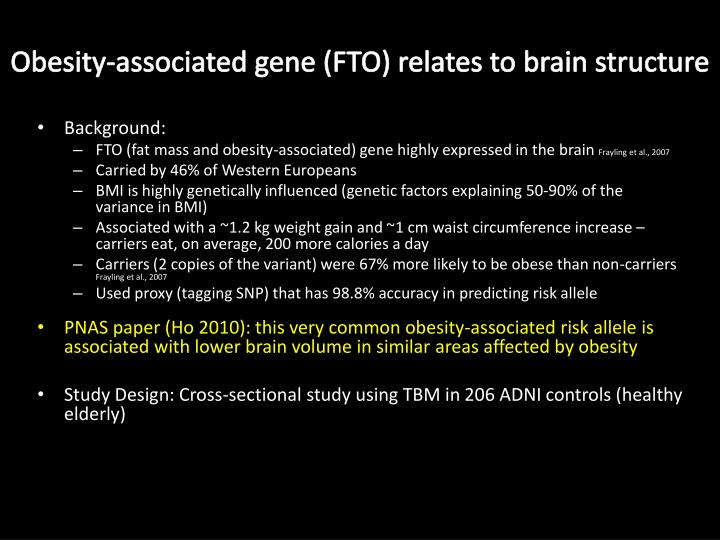 Obesity-associated gene (FTO) relates to brain structure