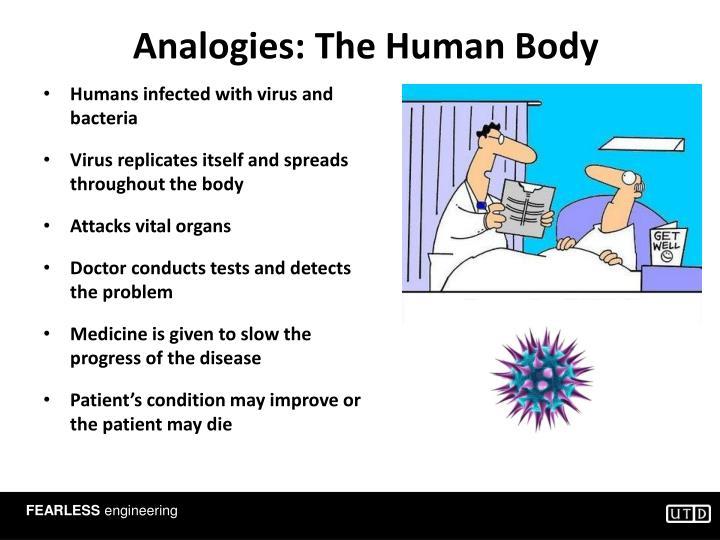 Analogies: The Human Body