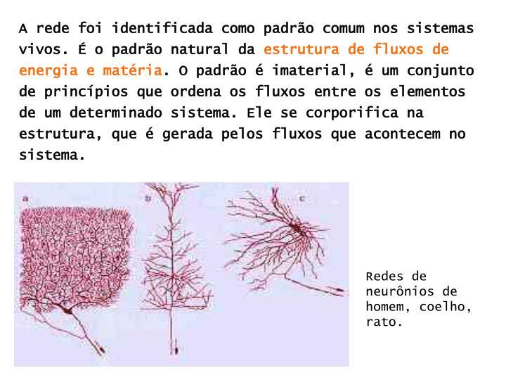 A rede foi identificada como padrão comum nos sistemas vivos. É o padrão natural da