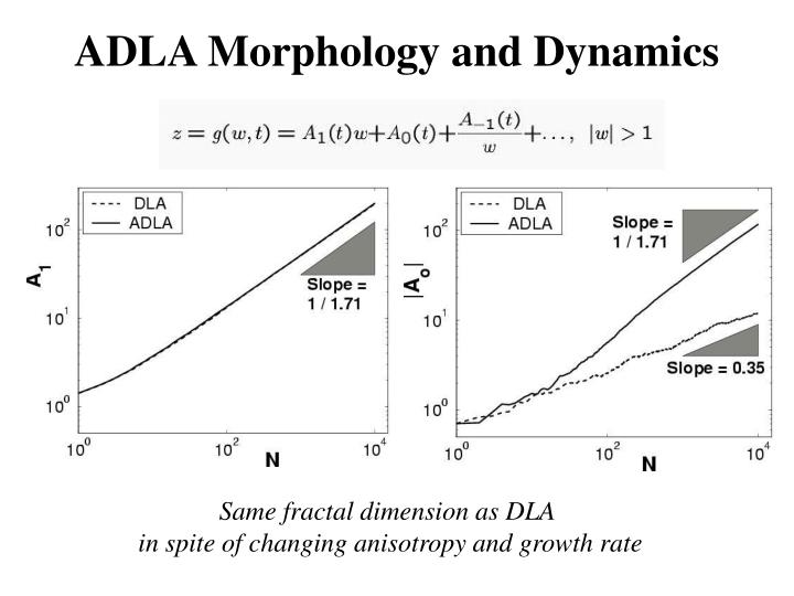 ADLA Morphology and Dynamics