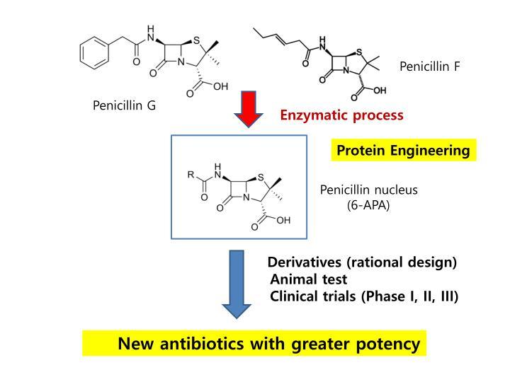 Penicillin nucleus
