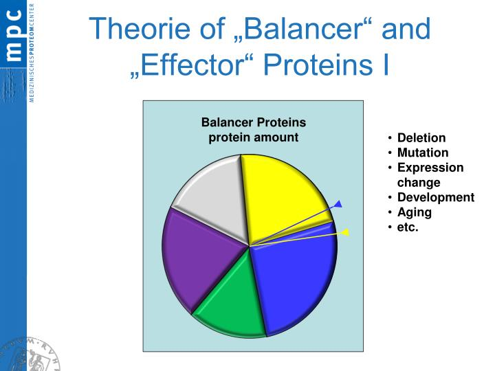 "Theorie of ""Balancer"" and ""Effector"" Proteins I"