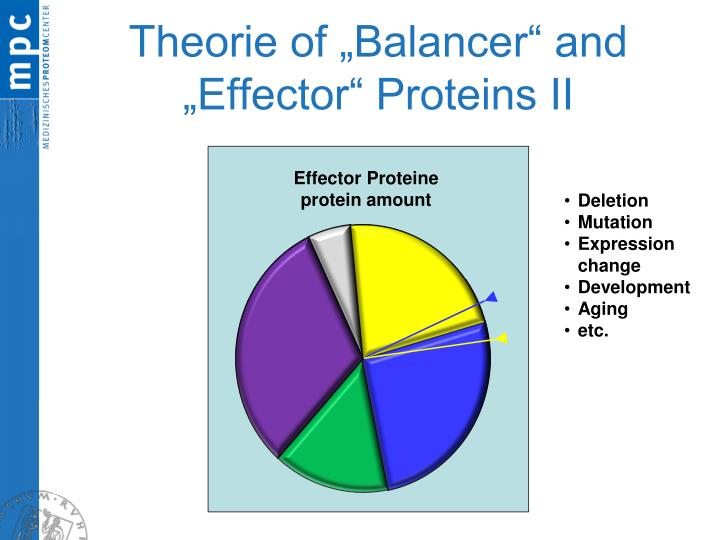 "Theorie of ""Balancer"" and ""Effector"" Proteins II"