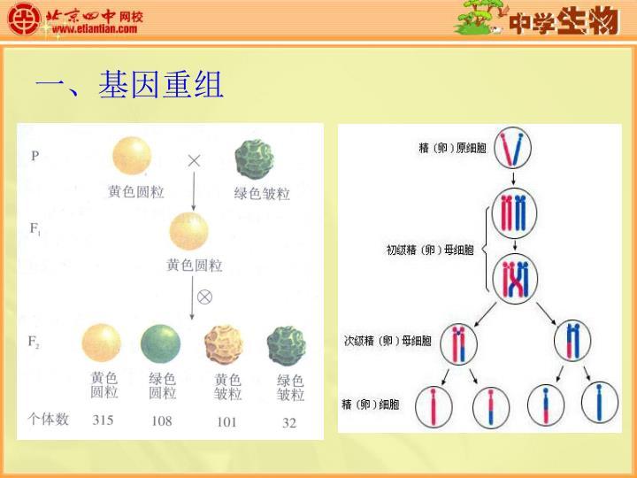 一、基因重组