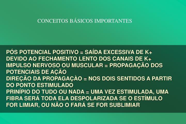 CONCEITOS BSICOS IMPORTANTES