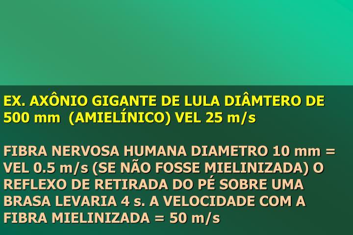 EX. AXNIO GIGANTE DE LULA DIMTERO DE 500