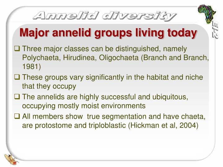 Major annelid groups living today