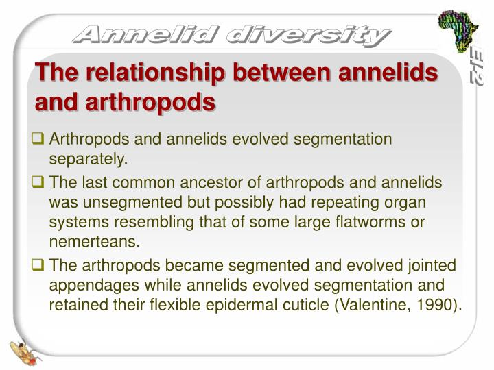 Arthropods and annelids evolved segmentation separately.
