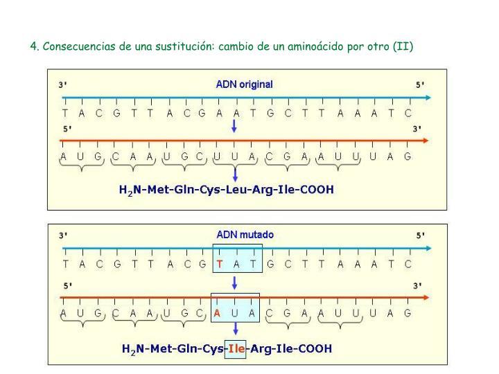 4. Consecuencias de una sustitución: cambio de un aminoácido por otro (II)