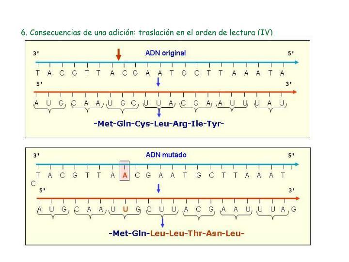 6. Consecuencias de una adición: traslación en el orden de lectura (IV)