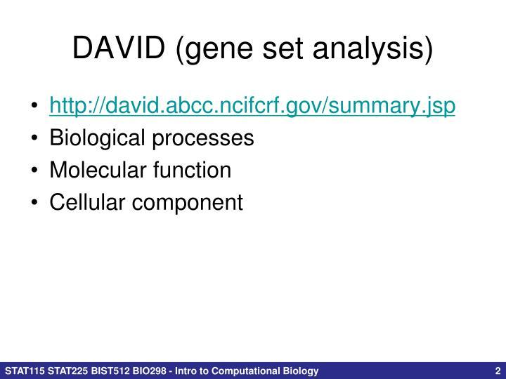 DAVID (gene set analysis)