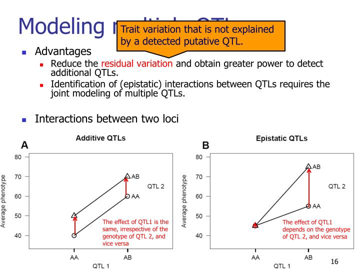 Modeling multiple QTLs