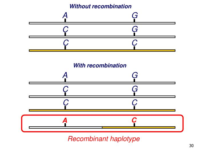 Without recombination
