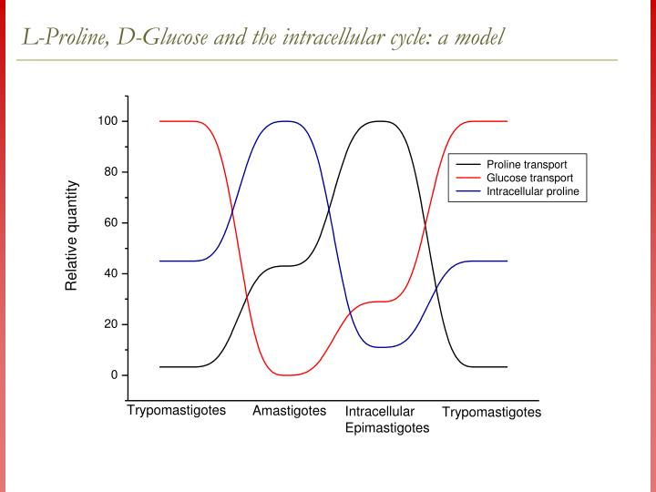 L-Proline, D-Glucose and the intracellular cycle: a model