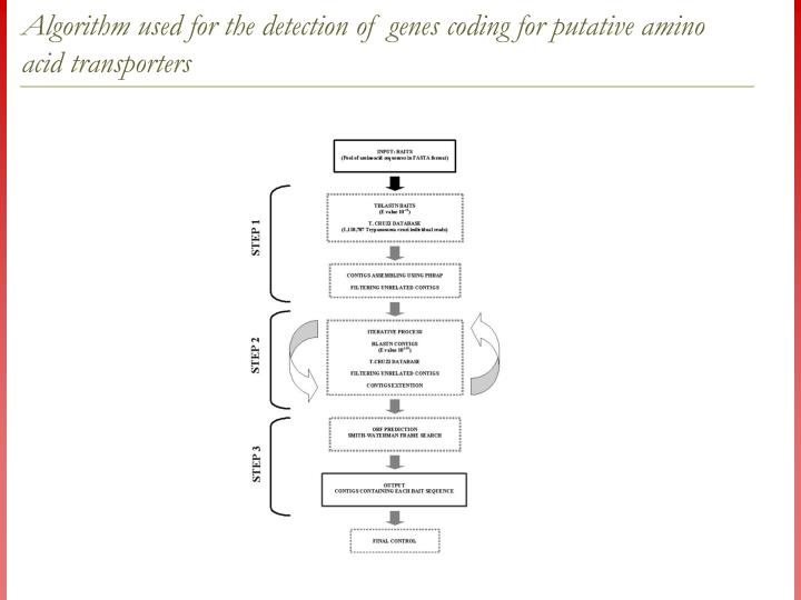Algorithm used for the detection of genes coding for putative amino acid transporters
