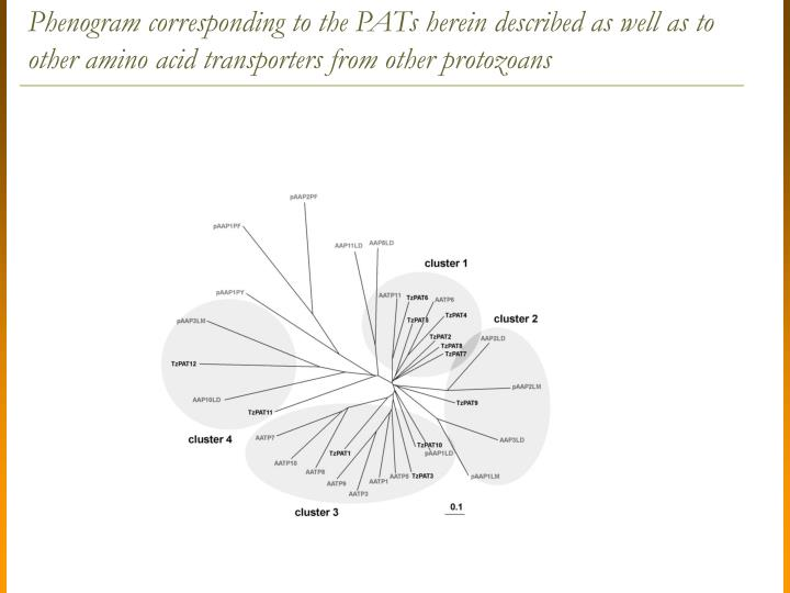 Phenogram corresponding to the PATs herein described as well as to other amino acid transporters from other protozoans