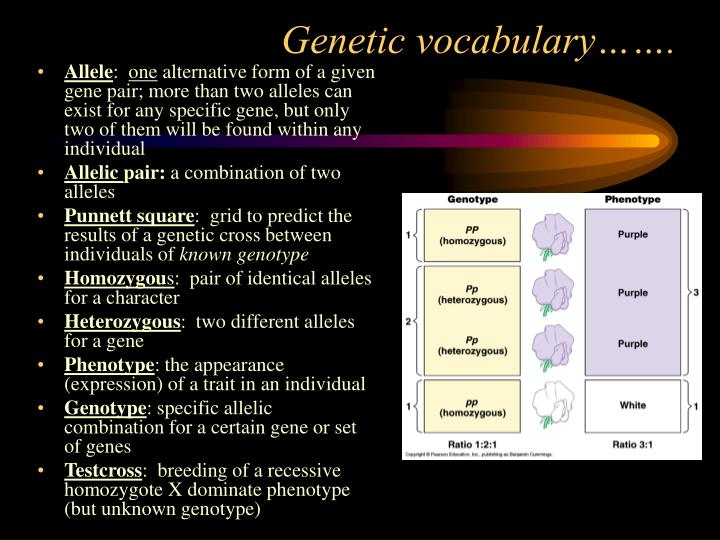 Genetic vocabulary…….