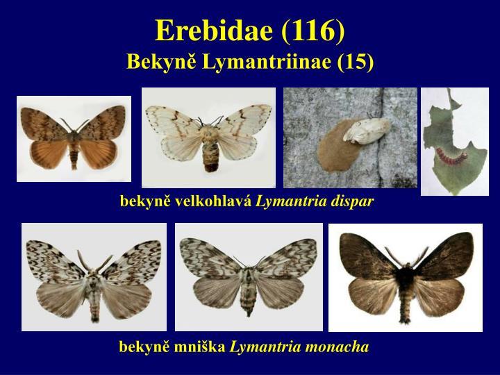 Erebidae (116)