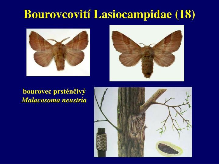 Bourovcovití Lasiocampidae (18)
