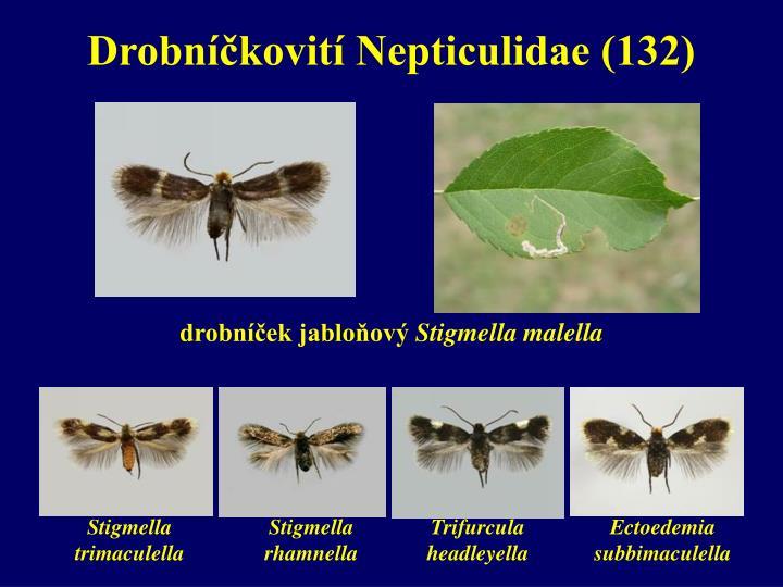 Drobníčkovití Nepticulidae (132)