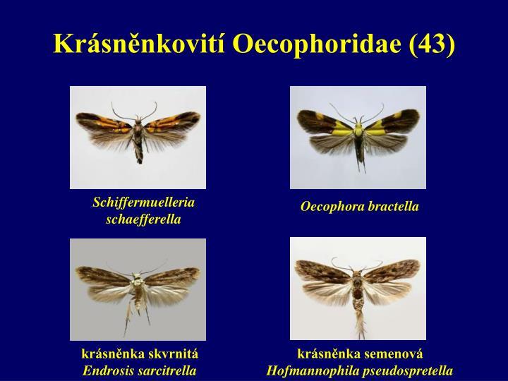 Krásněnkovití Oecophoridae (43)