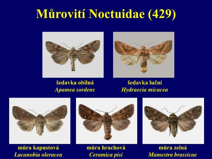 Můrovití Noctuidae (429)