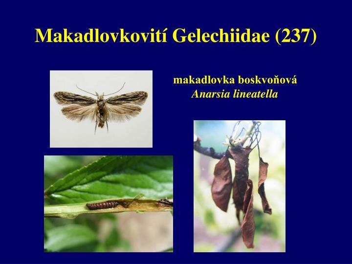 Makadlovkovití Gelechiidae (237)