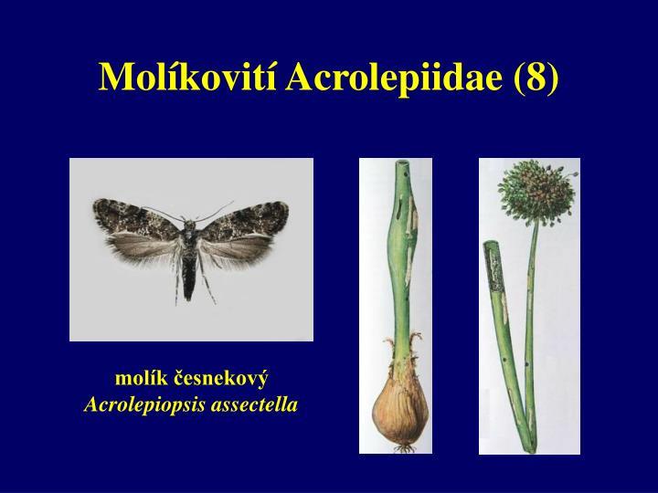 Molíkovití Acrolepiidae (8)