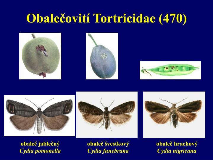 Obalečovití Tortricidae (470)