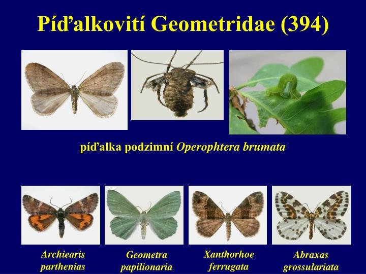 Píďalkovití Geometridae (394)