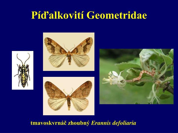 Píďalkovití Geometridae
