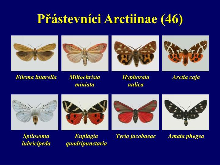 Přástevníci Arctiinae (46)