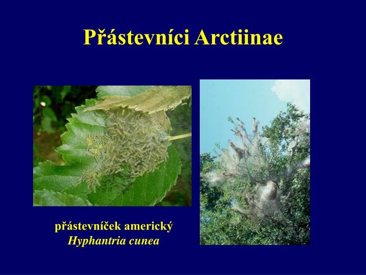 Přástevníci Arctiinae