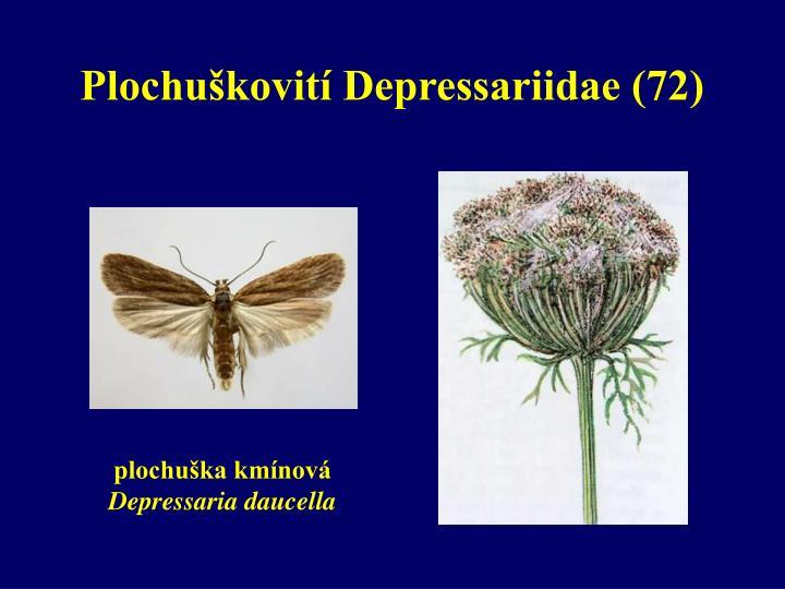 Plochuškovití Depressariidae (72)